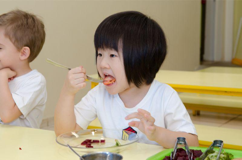 11. Alimentação