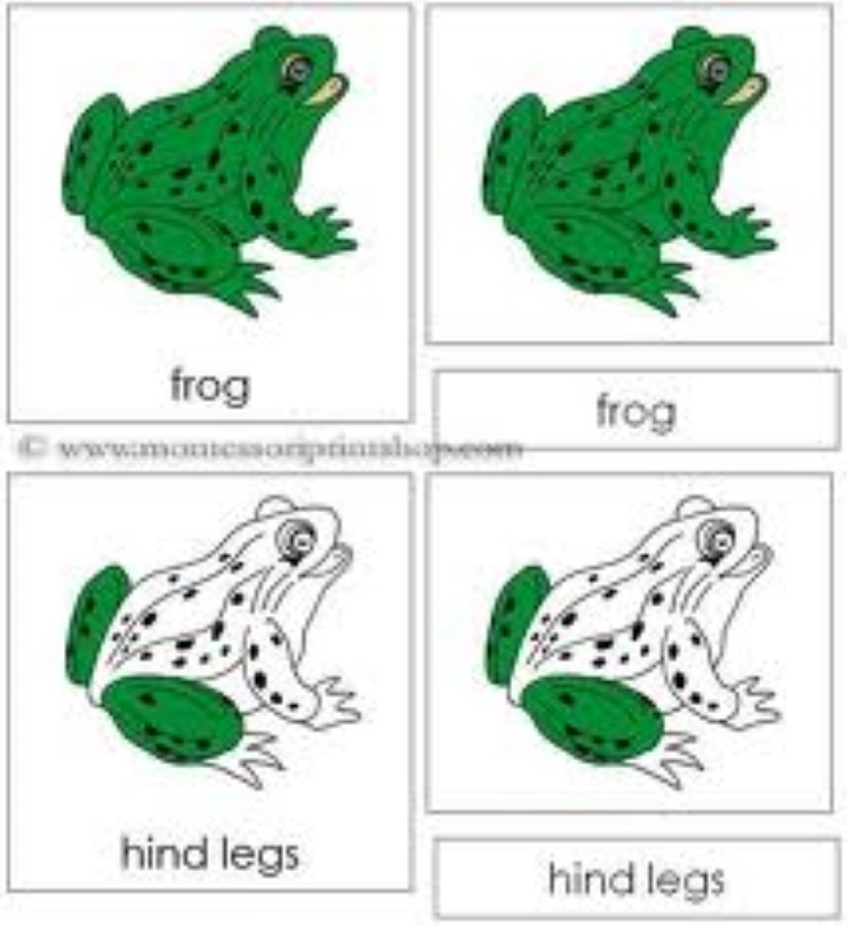 Parts of the Frog