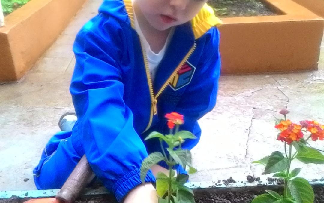 Infantile – Regar as Plantas