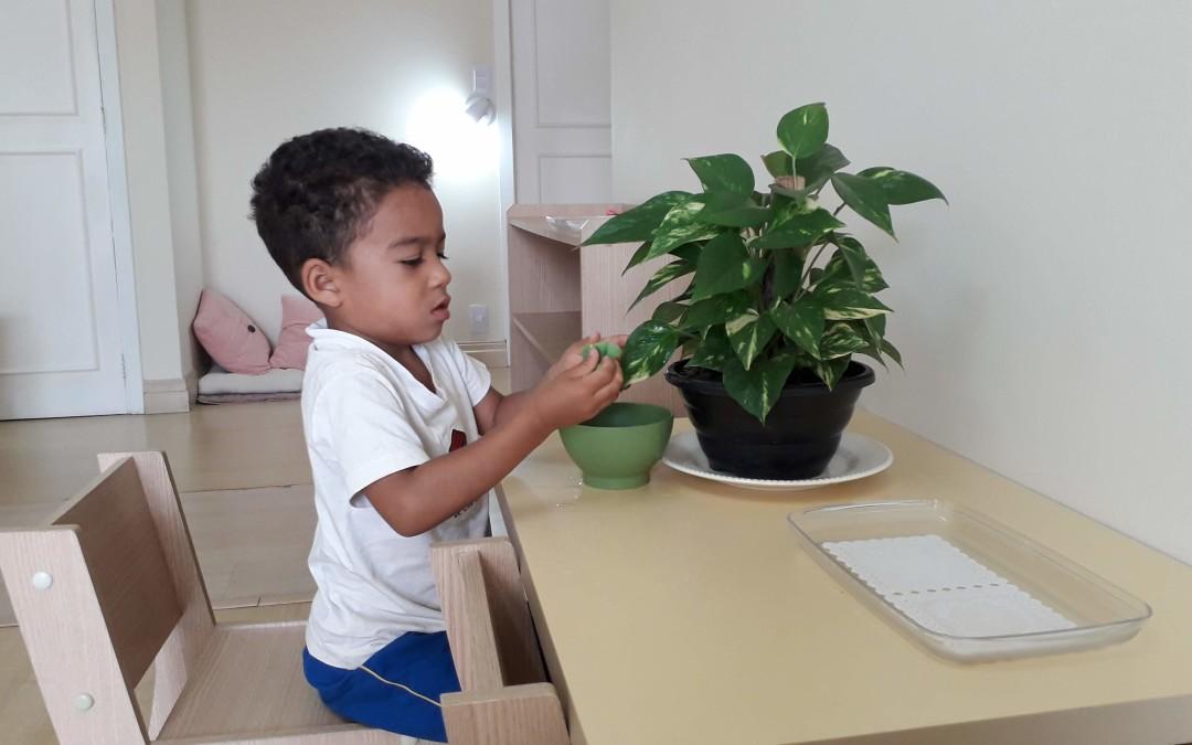 Infantile – Limpar as Folhas